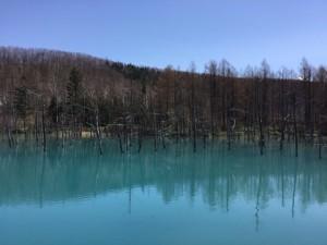 青い池 (1)