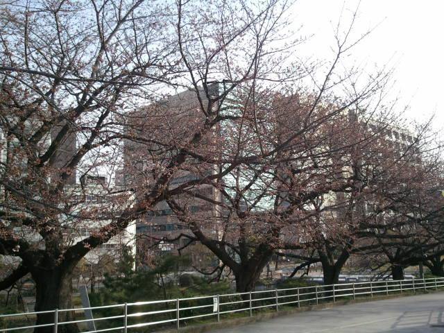 村上)ブログ写真2