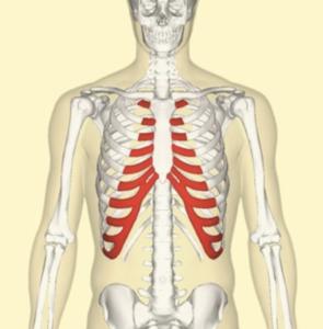 真ん中 痛い 肋骨